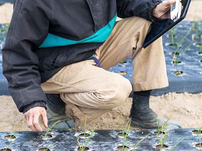 農薬の適正使用に努める